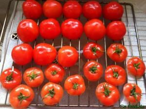 Tomates farcies (5)